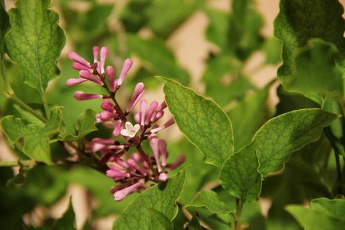 99.365 Budding Flower