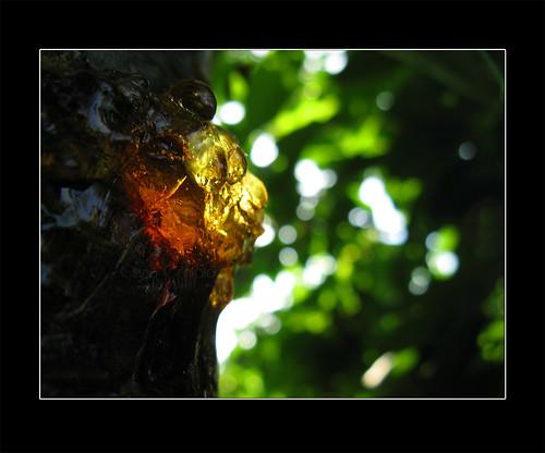 Ambra malefica by [Piccola_iena]