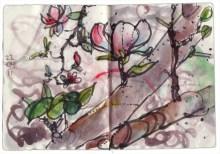magnolie_220411