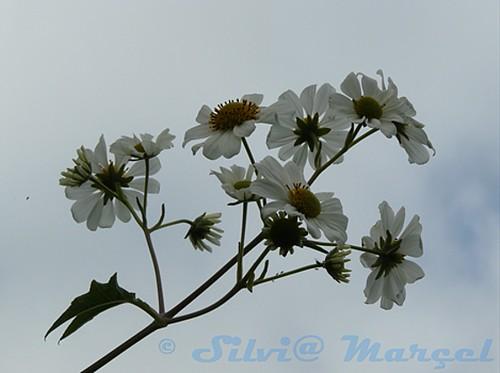 Flores en el cielo by Maravillate