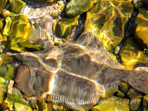 Flounder?