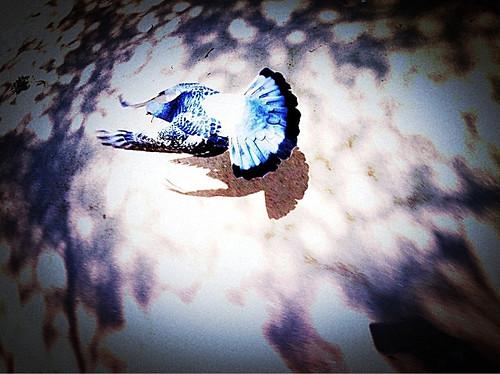 Fly, 飛ぶ