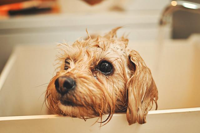 [108-365] Wet Dog