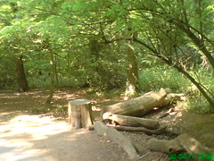 Highgate Wood in the Heat, May Bank Holiday Weekend