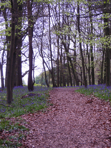 Chantry Woods 03