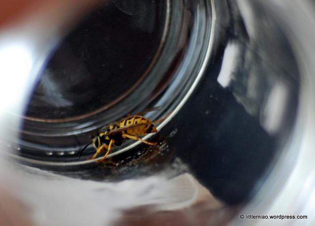 bug 5-6-2011 11-03-20 AM