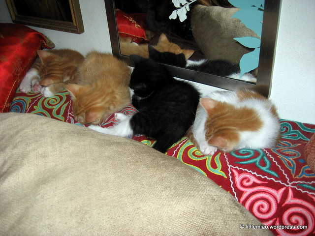 four kittens!