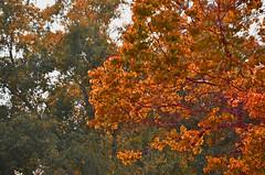 Foliage / Follage