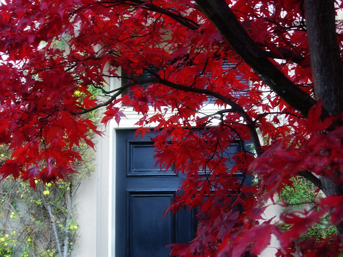 Red-leaves-and-door