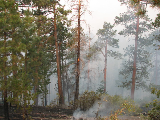 Fire in the Jemez