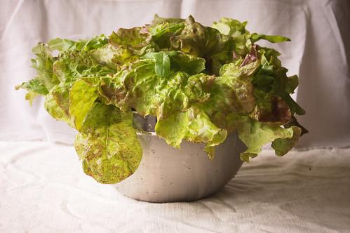 Daily Lettuce