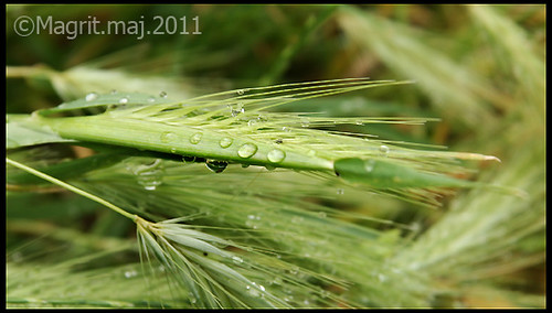 after_the_rain walk