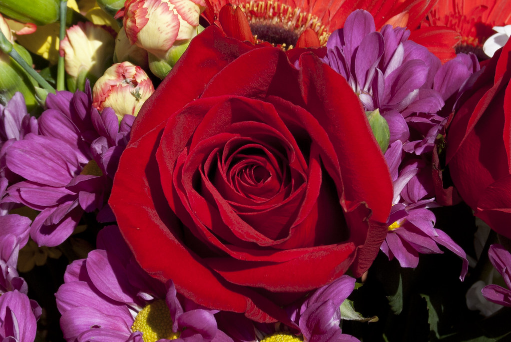 Detalle de una rosa