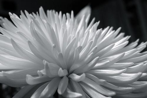 Bloom 350/365