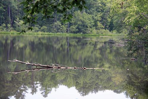 Turtles on a log by aimeesblog