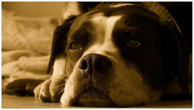 #162/365 Dog:Milka