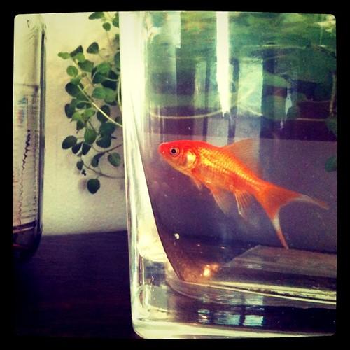 Please meet Goldy. My daughter finally has a pet. (thanks VBS)
