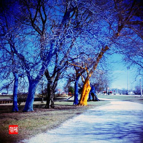 KodakDuaflexIV CHI Velvia100 LP-RainbowTrees01B