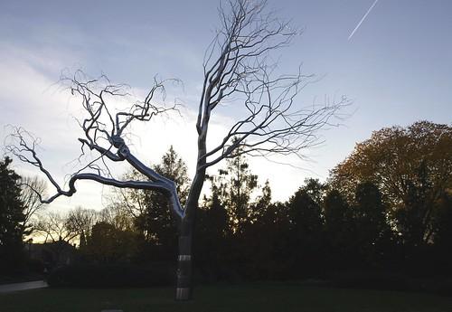 November-Baum