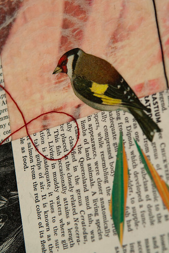 bird collage-5