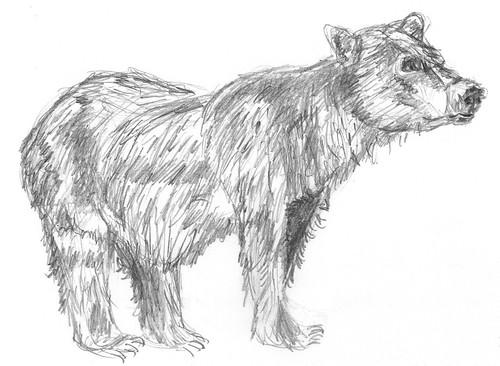 Drawing bears, part 3 (drawing 2)