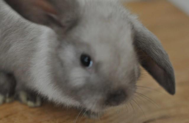 Thumper 2