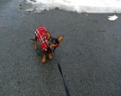 Toby Stops Walking