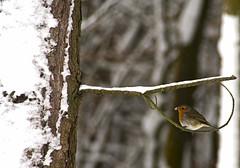 Robin in a loop