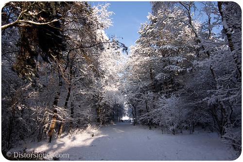 Entrando a un bosque nevado