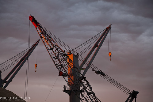 Cranes at Sunset