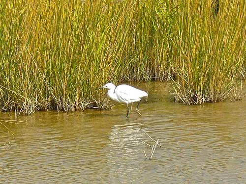 崇明东滩鸟类国家级自然保护区