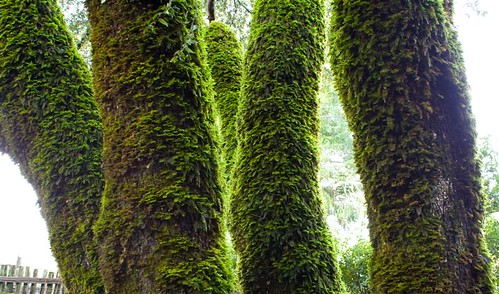 Mossy Trees 2 (Medium)
