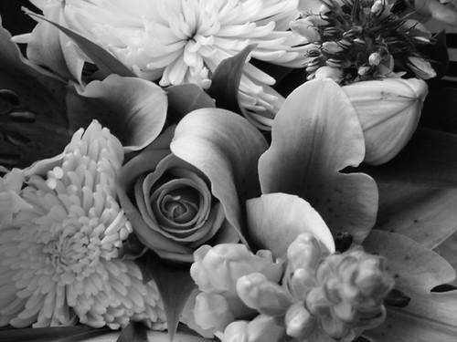 NiBW - Flowers
