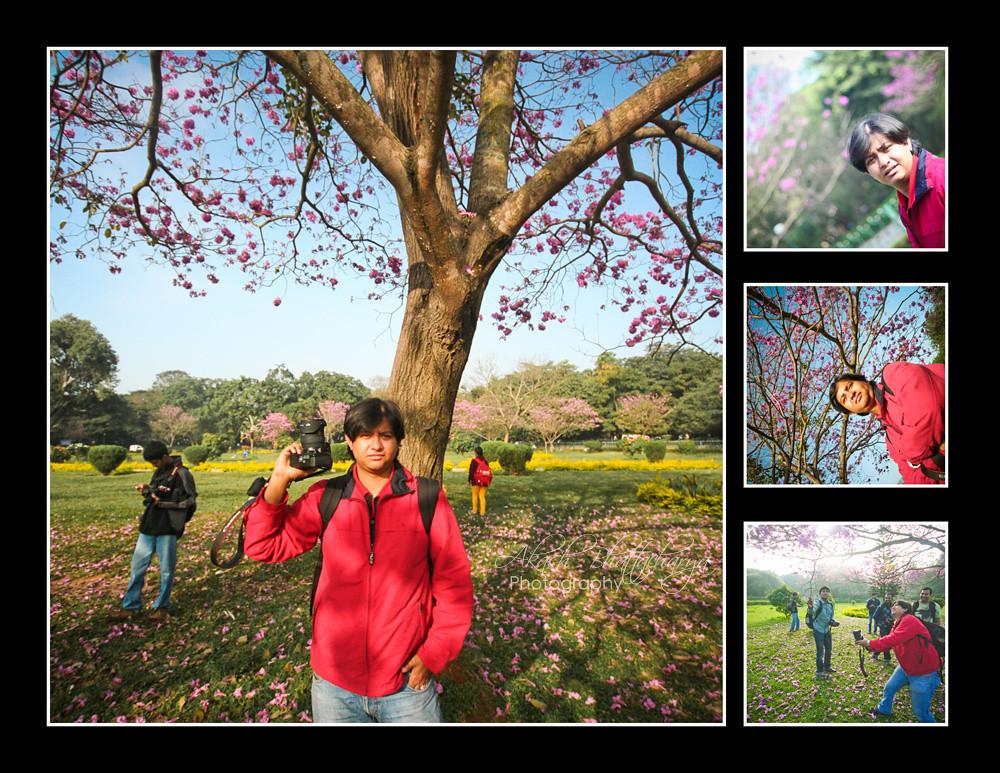Shaan @ Tabebuia Flowers | Bangalore