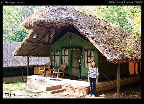 Tented cottage   Jungle Lodges Resort, Kabini
