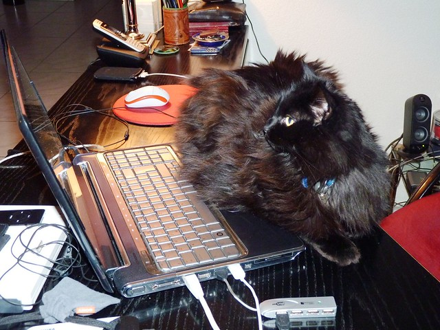 Nera planning a web site