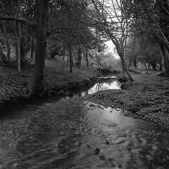 Dockens Water ripples