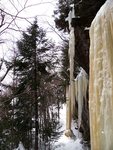tree sized icicles