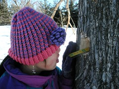 Measuring Depth of Woodpecker Hole