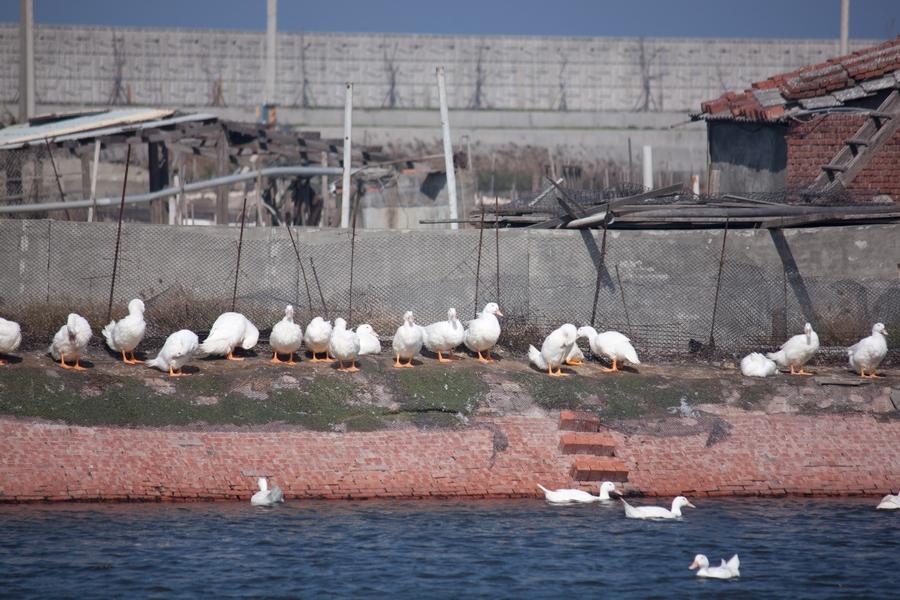 20110205_01_Beautiful Duckling_08