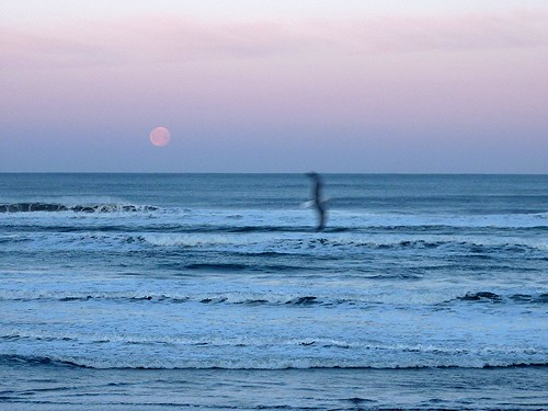 moonset gull
