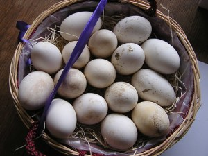 16 Goose Eggs Basket