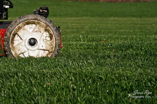 A freshly cut lawn.