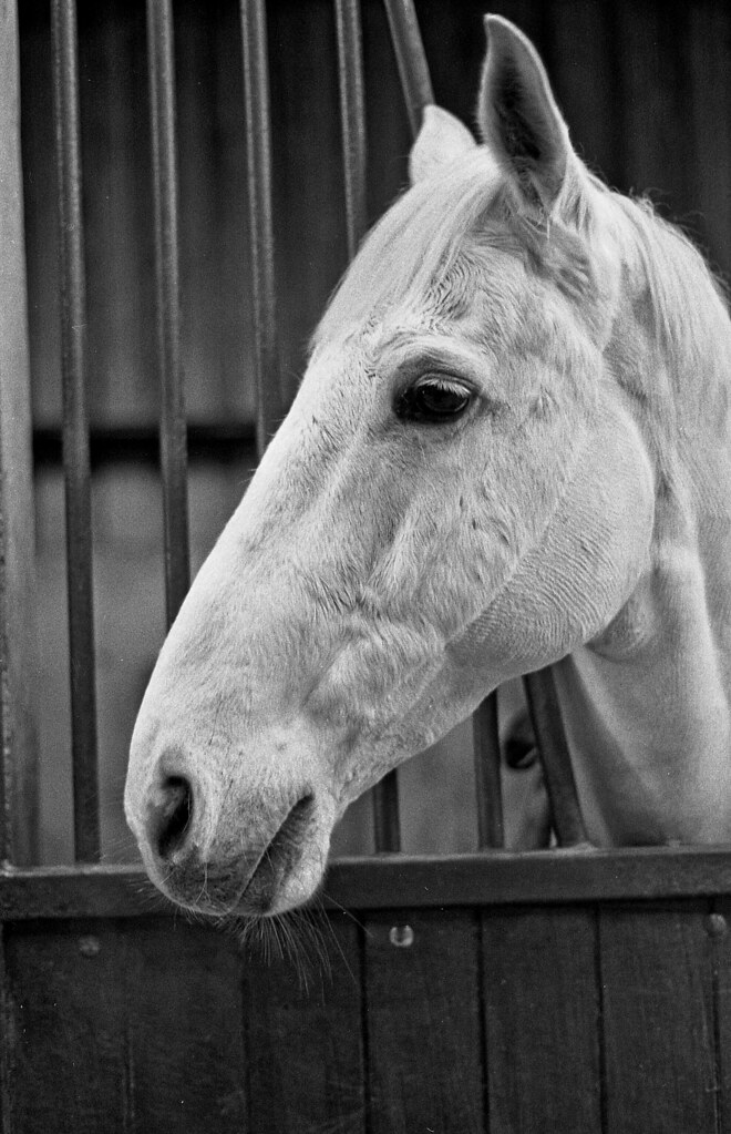 Horse #1