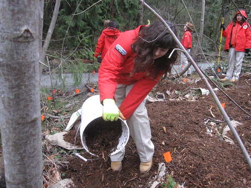 Protecting native plants through mulch
