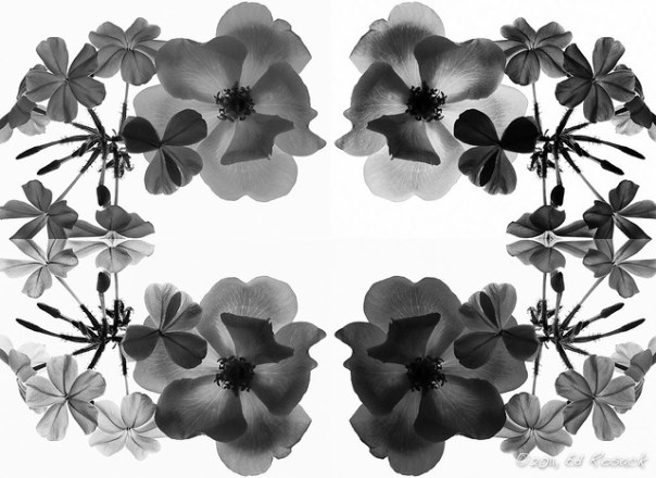 Composite Black and White Image