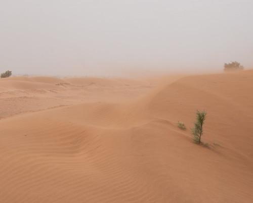 Sandstorm no. 2