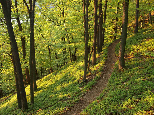 "Hiking trail through an oak forest - ""Kno..."