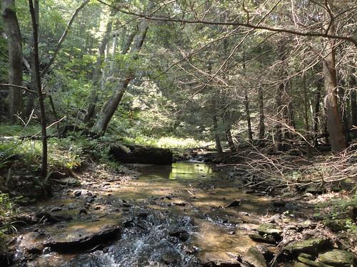 Brook Trout Stream