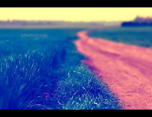 (92/365) Camino by albertopveiga